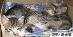 にほんブログ村 猫ブログ 兄弟猫・姉妹猫へ
