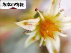 にほんブログ村 地域生活(街) 九州ブログ 熊本(市)情報へ