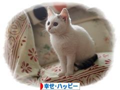 にほんブログ村 その他日記ブログ 幸せ・ハッピーへ