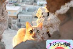 にほんブログ村 海外生活ブログ エジプト情報へ