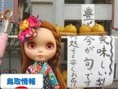 にほんブログ村 地域生活(街) 中国地方ブログ 鳥取県情報へ