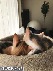 にほんブログ村 猫ブログ 猫 ホリスティックケアへ
