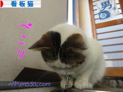 にほんブログ村 猫ブログ 看板猫へ