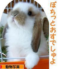 にほんブログ村 写真ブログ 動物写真へ