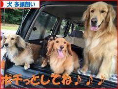 にほんブログ村 犬ブログ 犬 多頭飼いへ