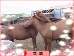 にほんブログ村 アウトドアブログ 乗馬・馬術