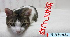 にほんブログ村 コレクションブログ リカちゃんへ