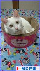 にほんブログ村 猫ブログ MIX白猫へ