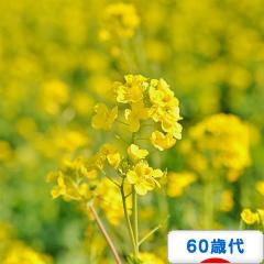 にほんブログ村 シニア日記ブログ 60歳代へ