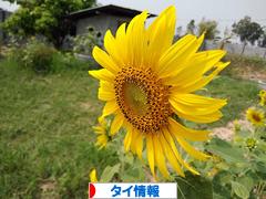 にほんブログ村 海外生活ブログ タイ情報へ