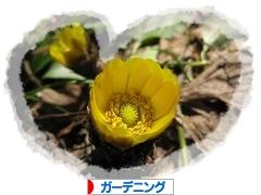 にほんブログ村 花・園芸ブログ ガーデニングへ