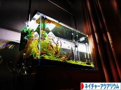 にほんブログ村 観賞魚ブログ ネイチャーアクアリウムへ