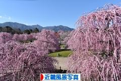 にほんブログ村 写真ブログ 近畿風景写真へ