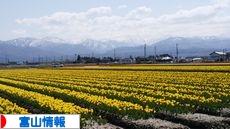にほんブログ村 地域生活(街) 中部ブログ 富山県情報へ