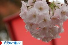 にほんブログ村 写真ブログ デジタル一眼レフカメラへ