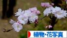 にほんブログ村 写真ブログ 植物・花写真へ