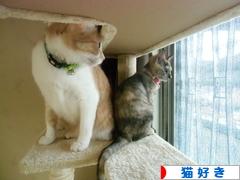 にほんブログ村 猫ブログ 猫好きへ