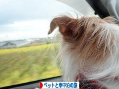 にほんブログ村 旅行ブログ ペット同伴車中泊の旅へ