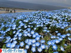 にほんブログ村 花・園芸ブログ ベランダガーデン(マンション)へ