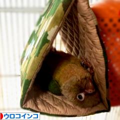 にほんブログ村 鳥ブログ ウロコインコへ