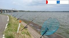 にほんブログ村 釣りブログ 鯉釣りへ