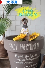 にほんブログ村 犬ブログ 犬 写真へ