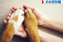 にほんブログ村 犬ブログ 犬の豆知識へ