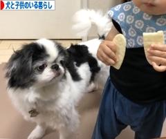 にほんブログ村 犬ブログ 犬と子供のいる暮らしへ