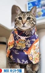 にほんブログ村 猫ブログ MIXキジトラ猫へ