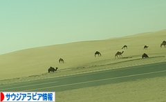 にほんブログ村 海外生活ブログ サウジアラビア情報へ
