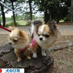 にほんブログ村 犬ブログ 犬の日常へ