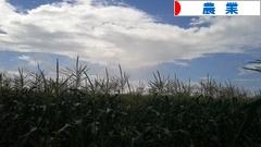 にほんブログ村 企業ブログ 農業へ