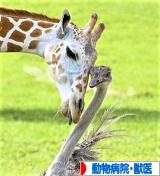 にほんブログ村 その他ペットブログ 動物病院・獣医へ