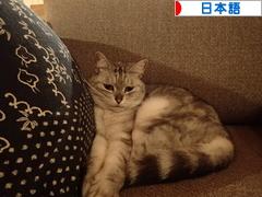 にほんブログ村 外国語ブログ 日本語(外国語)へ