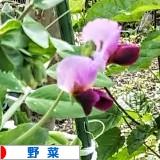 にほんブログ村 花・園芸ブログ  野菜へ