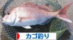 にほんブログ村 釣りブログ カゴ釣りへ