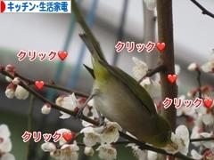 にほんブログ村 PC家電ブログ キッチン家電・生活家電へ