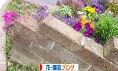 にほんブログ村 花・園芸ブログ