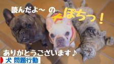 にほんブログ村 犬ブログ 犬 問題行動へ