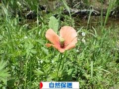 にほんブログ村 環境ブログ 自然保護・生態系へ