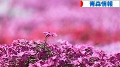 にほんブログ村 地域生活(街) 東北ブログ 青森県情報へ