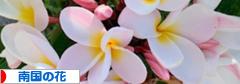 にほんブログ村 花・園芸ブログ 南国の花へ
