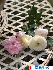 にほんブログ村 花・園芸ブログ 園芸生活へ