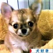 にほんブログ村 犬ブログ 犬好きへ