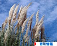にほんブログ村 地域生活(街) 四国ブログ 香川県情報へ