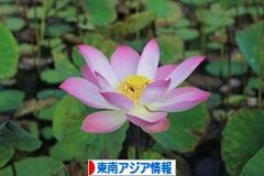 にほんブログ村 海外生活ブログ 東南アジア情報へ