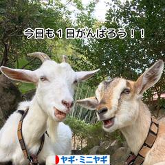 にほんブログ村 その他ペットブログ ヤギ・ミニヤギへ