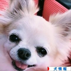 にほんブログ村 犬ブログ 犬情報へ