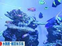 にほんブログ村 写真ブログ 水族館・観賞魚写真へ