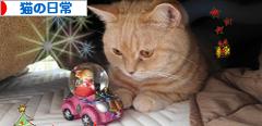 にほんブログ村 猫ブログ 猫の日常へ